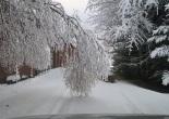 Lumi taittaa oksia